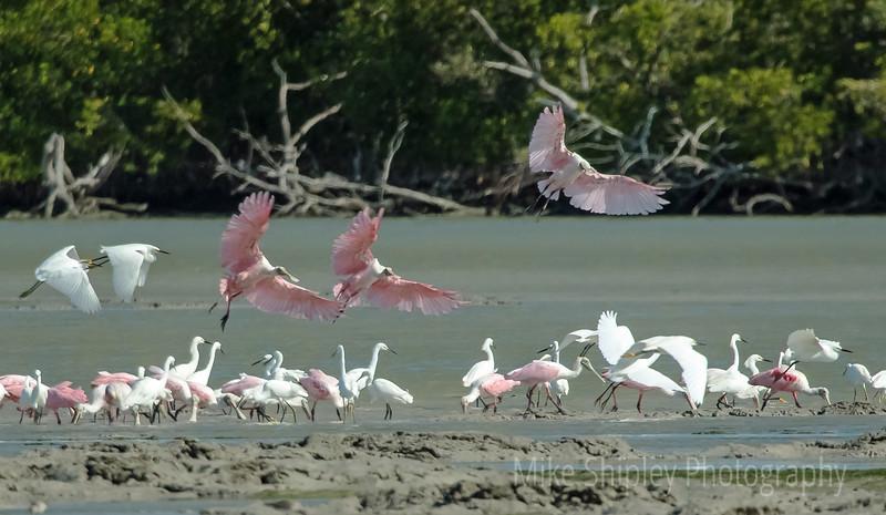 3 Pinks Landing