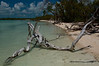 Log on Nest Key Beach