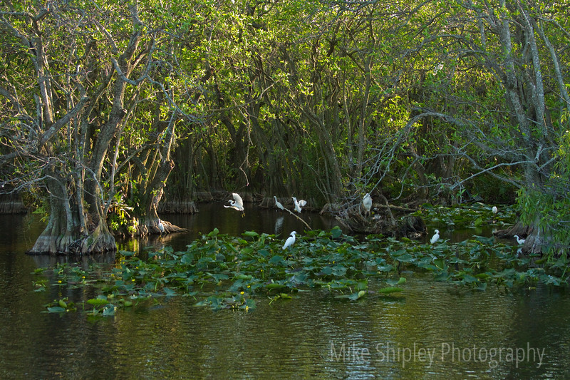 Life in a Marsh