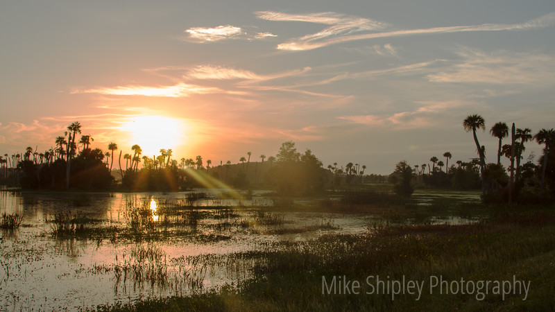Sunrise Over the Marsh, Orlando Wetlands Park