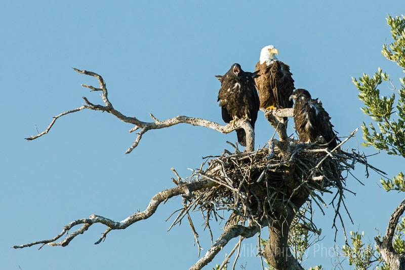 Happy Eagle Family