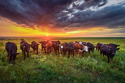 Crowded in Kansas