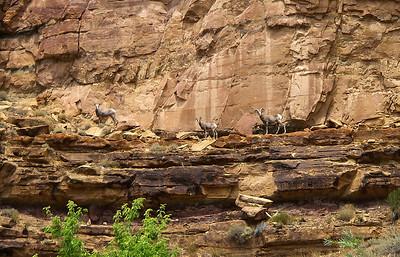 Desolation Canyon 2006