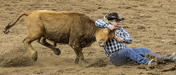 Cowboy puts the breaks on at Parada del Sol Rodeo Scottsdale Arizona 2 March 2014 _