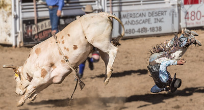 Cowoby tossed from bull at Cave Creek Rodeo 30 March