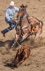 Cowboy ropes calf Cave Creek Rodeo 30 March 2014