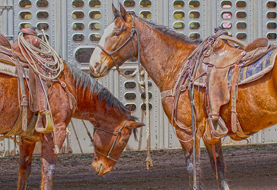 two horses at Cave Creek Rodeo 1 April 2012_