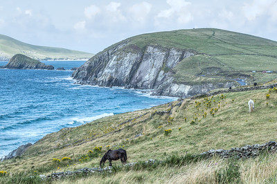 Horses at Dingle Peninsula Ireland Aug 2013-Edit