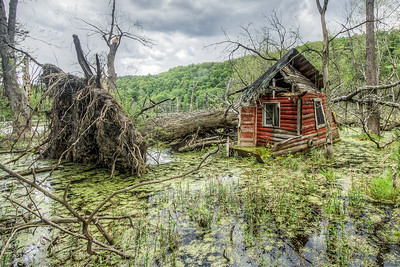 In a swamp in Eddyville, New York