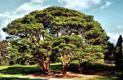 HDR NYBG Interesting Tree HDR