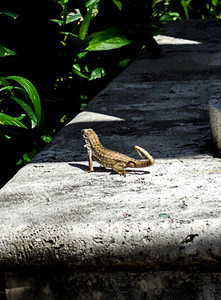 Atlantic Avenue Park Fauna-Delray 2-12-2014-0643