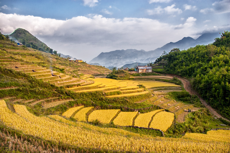 Rice paddies near Sapa