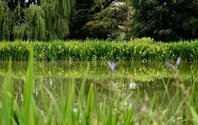 Old Westbury Gardens May 22 2013-7-88