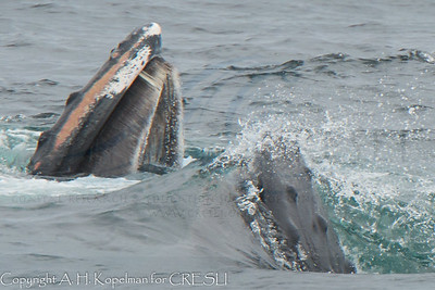 Best of 2013 Whale Watches
