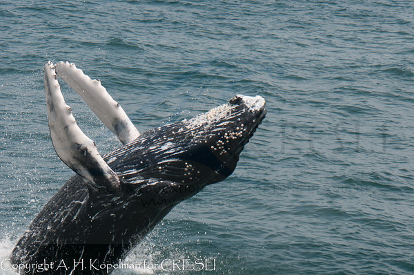 Best of the CRESLI whale watches 2012-present