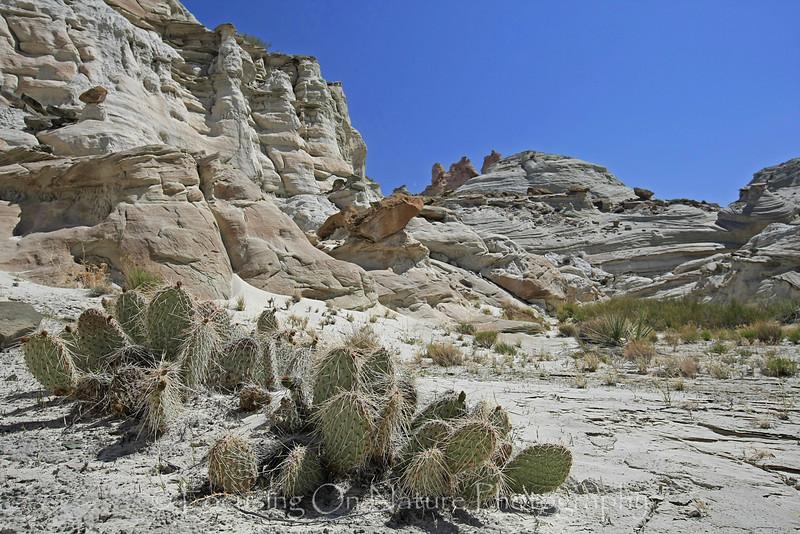 White Rocks scenic II