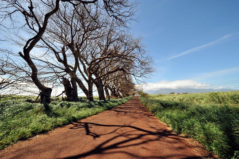 On the way to Paia, Maui