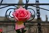 Gated Rose