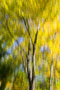 Fall Abstract | Another way to capture Fall colors.