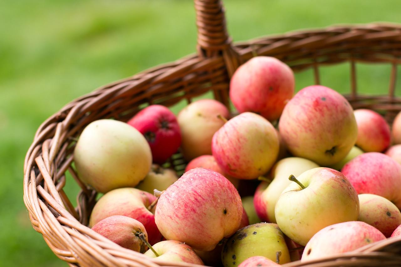 Syksyn omaa omenasatoa