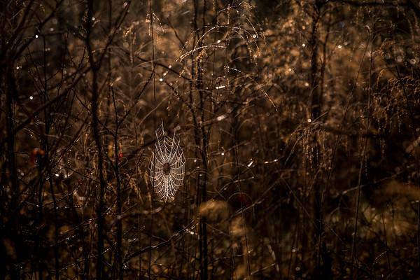 SpiderWebInForest