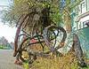 Madrone Tree - Carleton Avenue, Berkeley