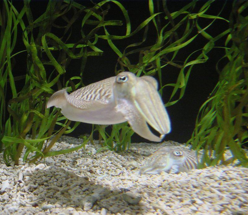 Monterey Aquarium, 1992