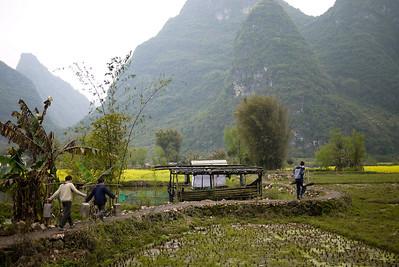The workers follow Pete into the rice paddies around Yangshuo, China.