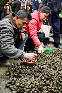 Locals pick through the snails and select the tastiest at the Fuli Market near Yangshuo, China.