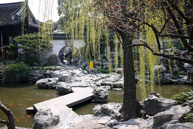 Wispy tree at the Yuyuan Garden in Shanghai, China
