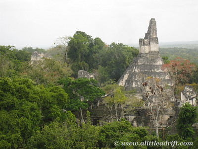 Tikal from Temple 5