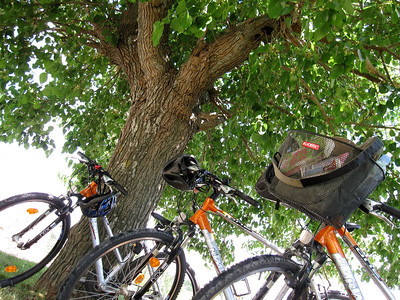 Bikes Under the Mulberry Tree