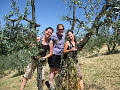 Frolicking in the Olive Trees