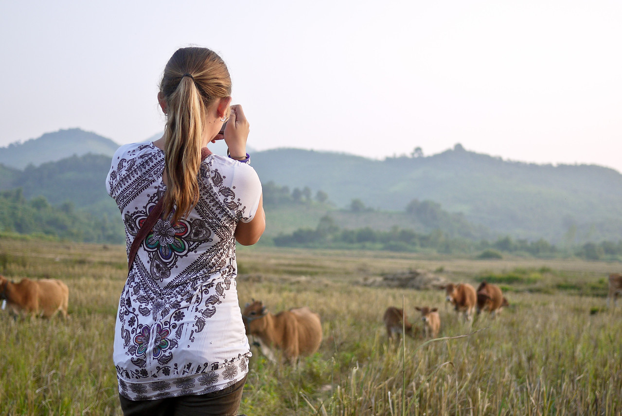 Ana frames her photo and snaps some shots of the cows outside of Hongsa, Laos.