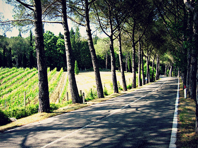 Tuscan Lane in the Country