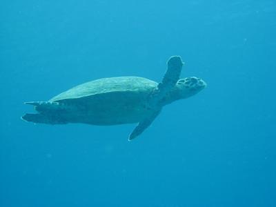 Turtle Again!