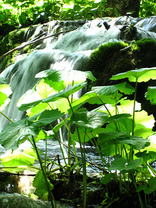 Verdant Green and Rushing Falls
