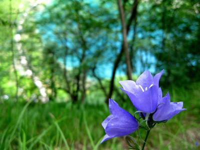 Flower on Blue Waters