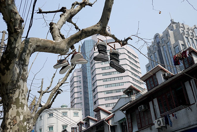 Shoes hanging from a tree in Shanghai, China