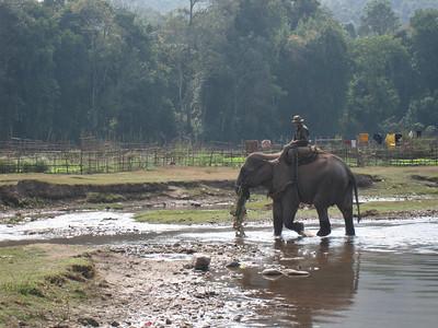 Elephant River
