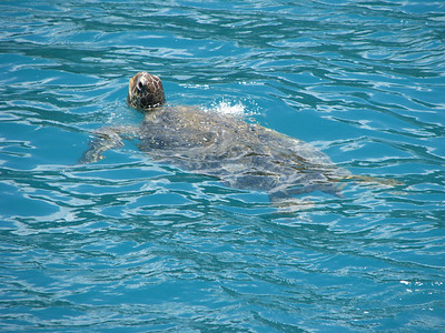 Mr. Turtle!