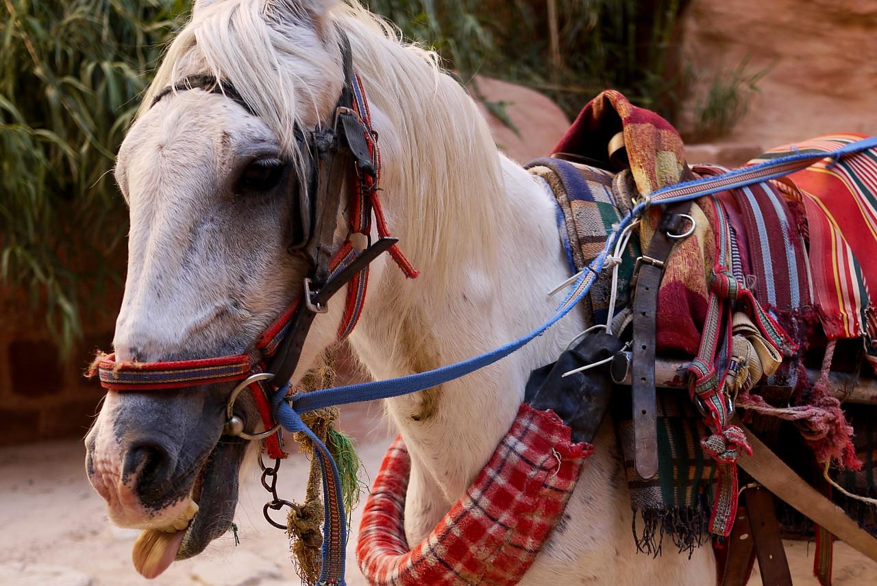 A silly horse at Petra, Jordan.