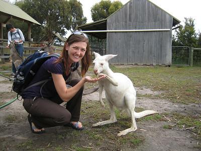 A rare albino kangaroo!