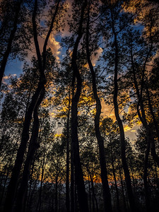 I worked these trees hard (aka. took a #plethora of #photos) because in my mind these #aspens are #dancing .  #mountain #village #Telluride #sunset I love #colorado and dancing trees at #sunset