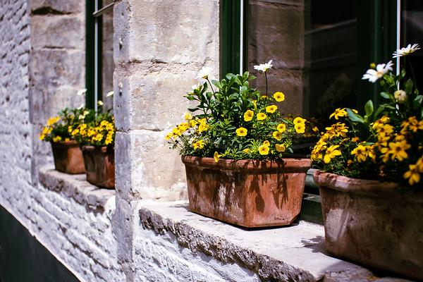boîtes à fleurs   flower boxes