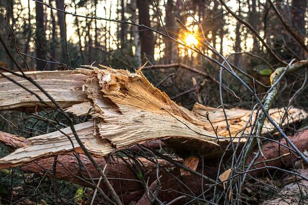 en février dans la forêt