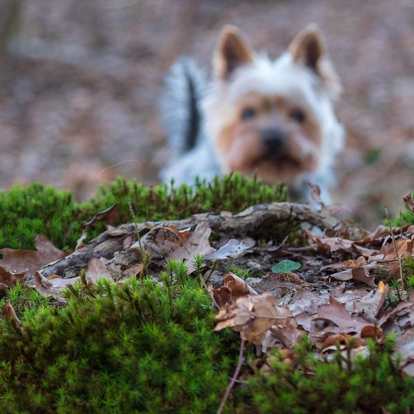 Pluto dans la forêt