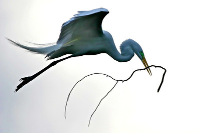 Egret, Palo Alto