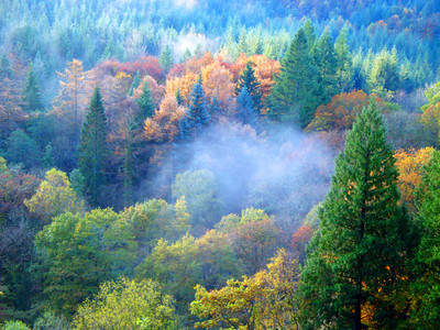 Autumn colours and valley mist, Snowdonia 2012