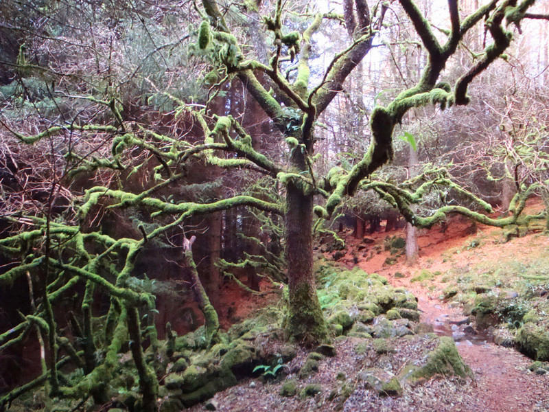 A spooky forest in Lord of the Rings Country, Snowdonia, Wales, 2012